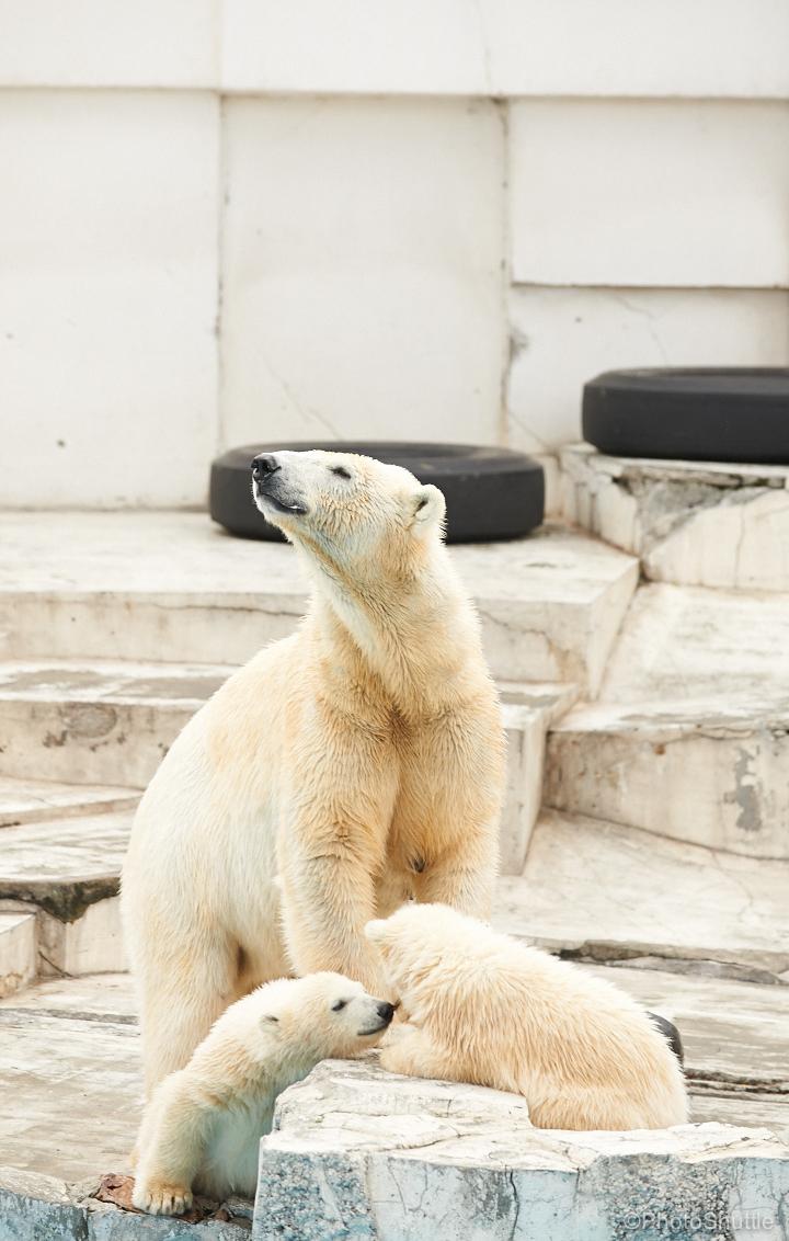 maruyama-zoo2