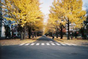 hokkaido-university-in-autumn_6380837873_o